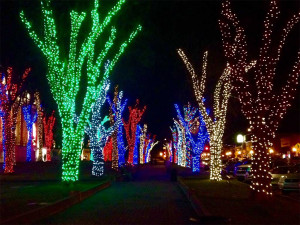 colored holiday tree lights